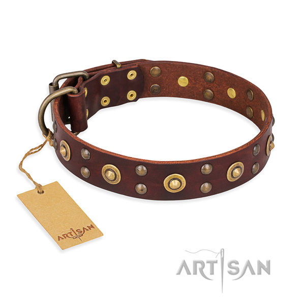 Brown leather dog collar with luxurious decorations