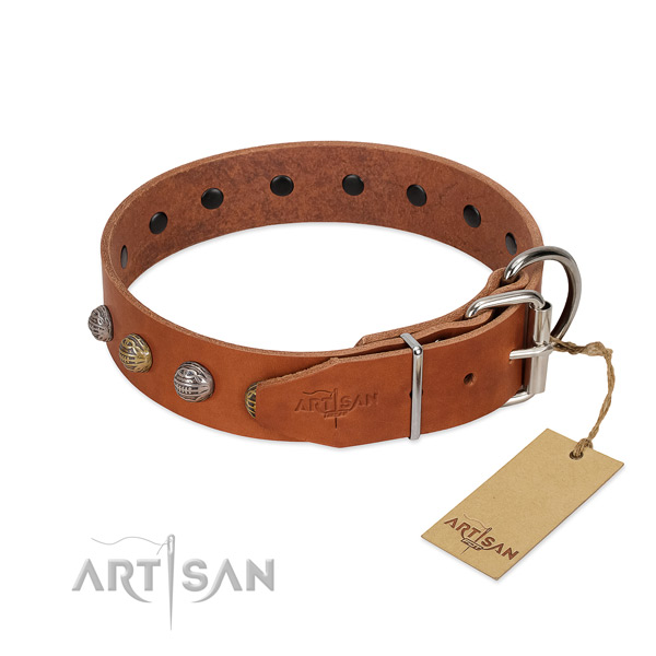 Tan leather dog collar with chrome plated hardware for daily walks