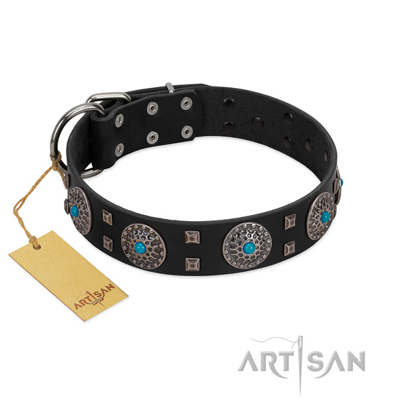 Stylish black leather dog collar with round conchos and studs