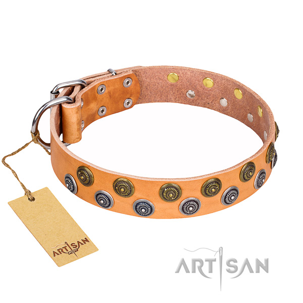 Tan leather dog collar with shining studs