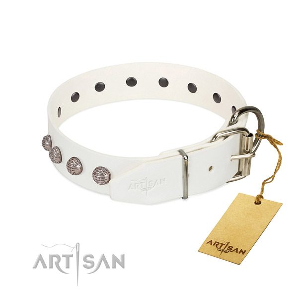 Reliable dog collar with chrome-plated hardware