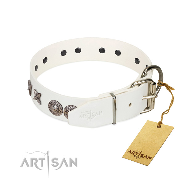 Fancy Leather Dog Collar with Sturdy Chrome-plated Hardware