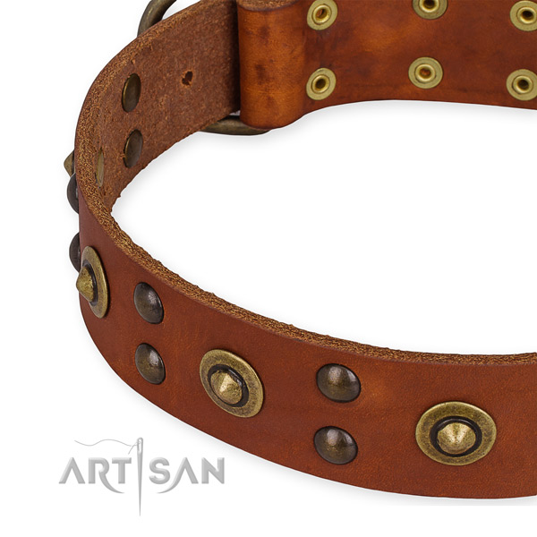 Tan leather dog collar with rustless studs