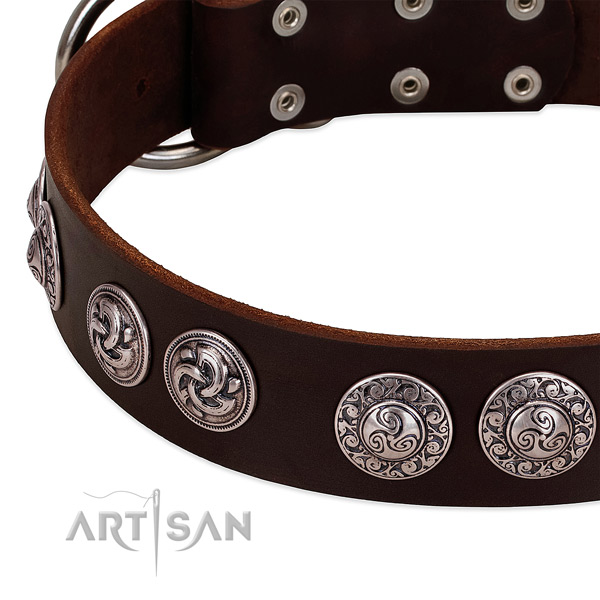 Brown leather dog collar with engraved brooches