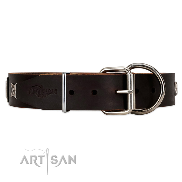 Brown leather dog collar with chrome plated hardware