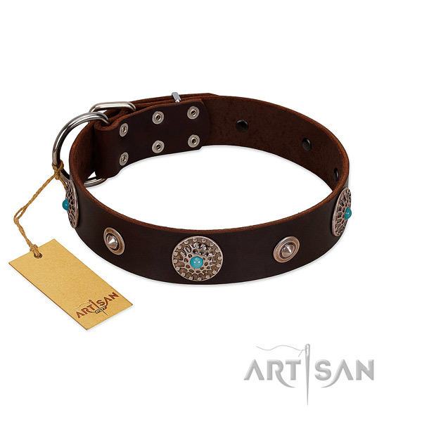 Stylish brown leather dog collar of premium quality