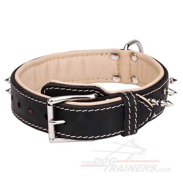 Spiked Leather Dog Collar with Nickel Plated Hardware