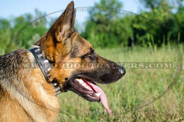 Decorated leather dog collar for German Shepherd