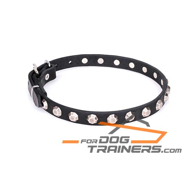 Charming studded leather dog collar
