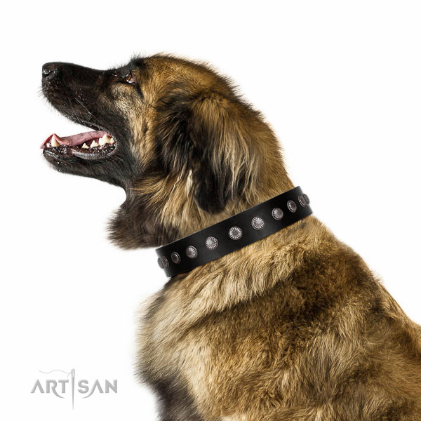 Walking top-notch quality walking leather Leonberger collar