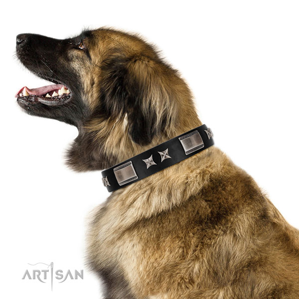 Adjustable leather Leonberger collar for daily walking