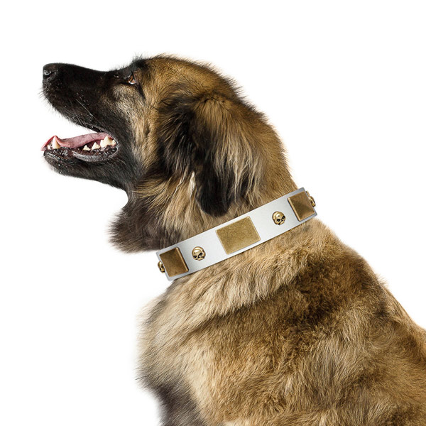White Leather Leonberger Collar with Handset Plates and Skulls