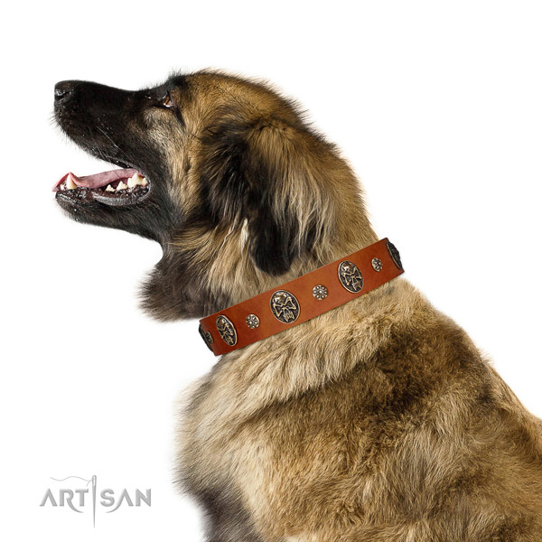 Adjustable Leonberger Artisan leather collar for comfortable wear