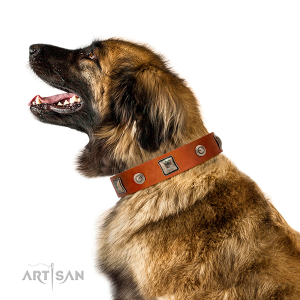 Beautiful leather Leonberger collar for walks