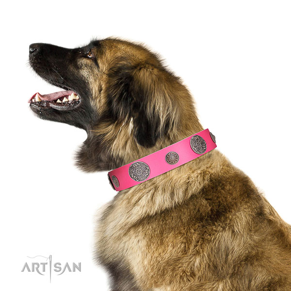 Extraordinary walking white leather Leonberger collar with