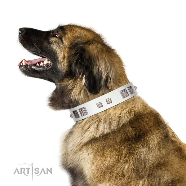 Extraordinary walking white leather Leonberger collar with chic decorations