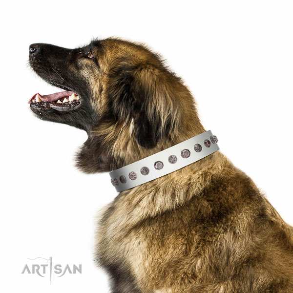 Fabulous walking white leather Leonberger collar with