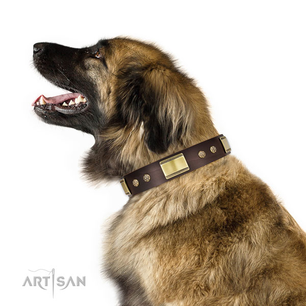 Leonberger comfy wearing dog collar of remarkable quality leather