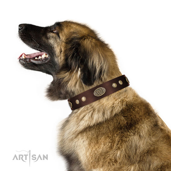 Leonberger comfortable wearing dog collar of awesome quality leather