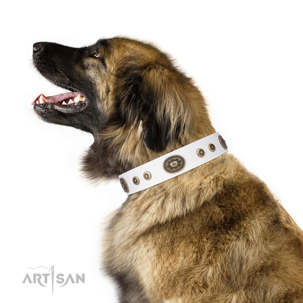 Leonberger handcrafted genuine leather dog collar with embellishments