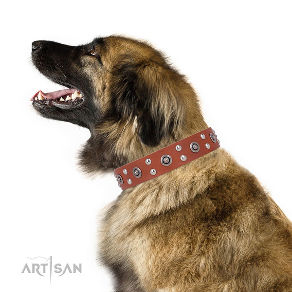 Leonberger everyday walking dog collar of incredible quality leather
