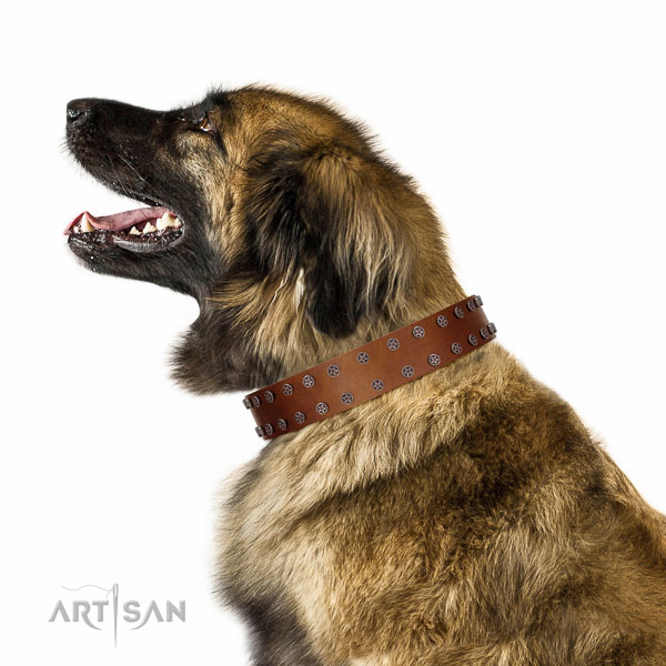 Extraordinary walking tan leather Leonberger collar with
