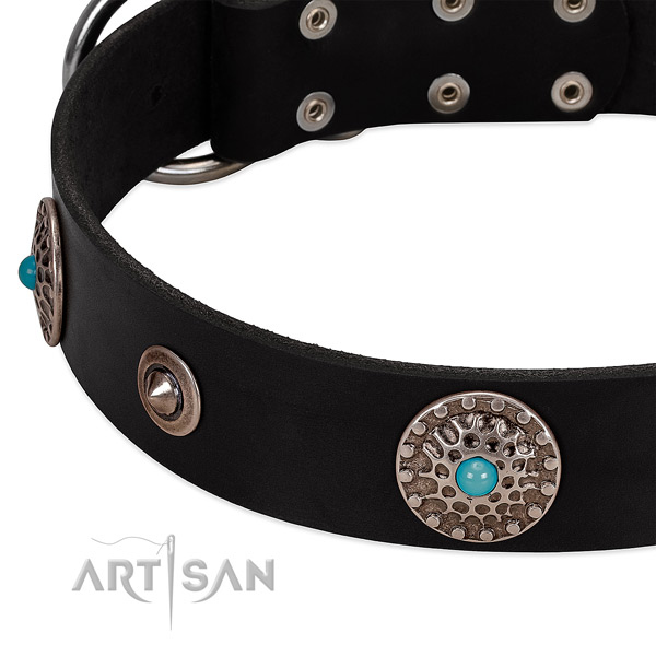 Elegant black leather dog collar with chrome-plated conchos and studs
