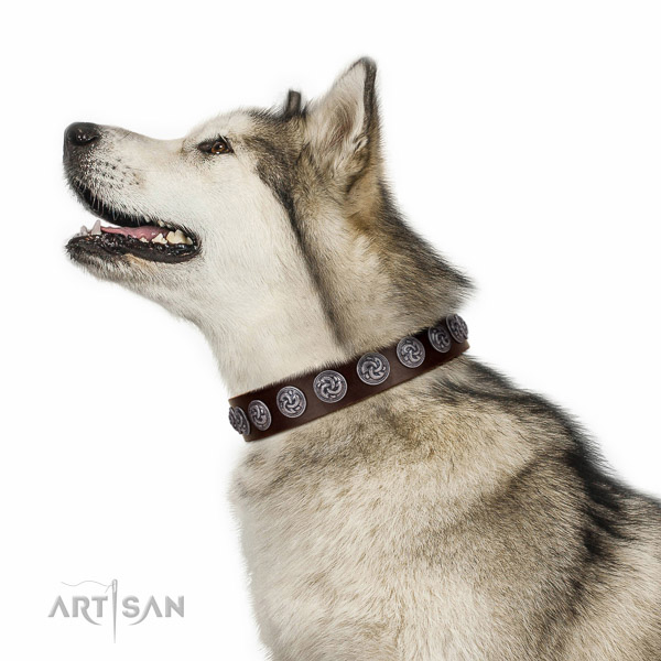 Brown leather Malamute collar made according to all