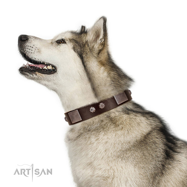 Extraordinary walking brown leather Malamute collar with chic decorations