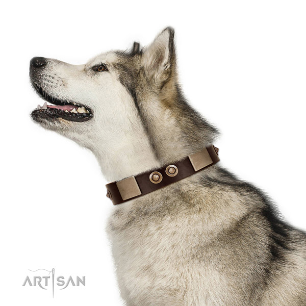 Soft to the touch leather Malamute collar for daily use