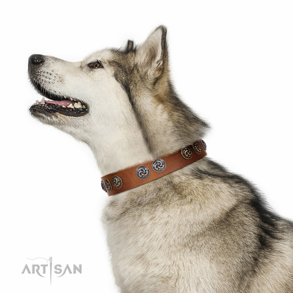 Extraordinary walking tan leather Malamute collar with chic decorations