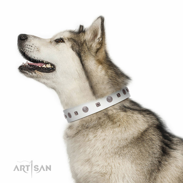 Walking top-notch quality walking leather Malamute collar