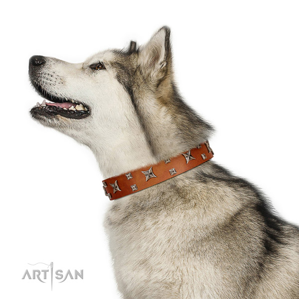 Safe leather Malamute collar without harmful elements