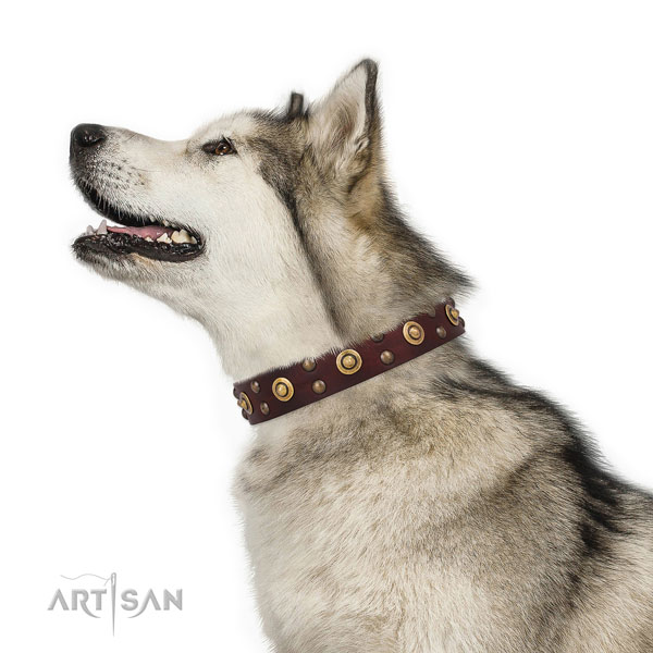 Malamute stylish walking dog collar of top quality genuine leather