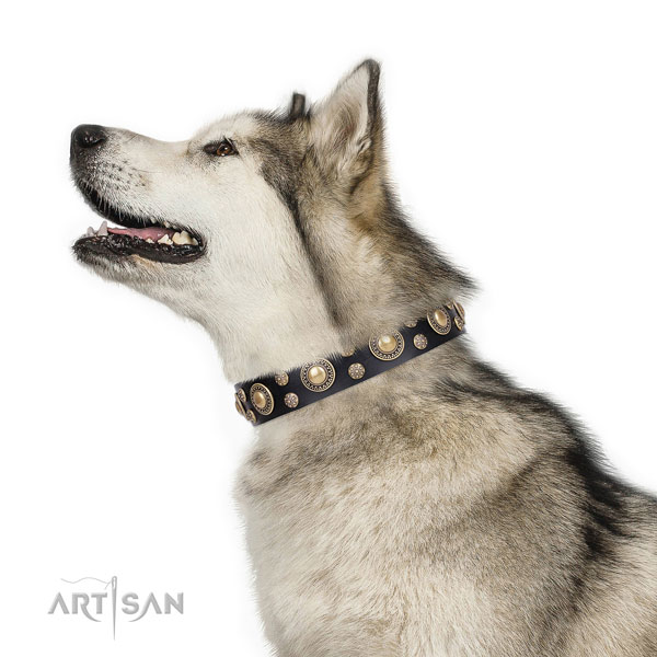 Malamute extraordinary full grain natural leather dog collar with studs