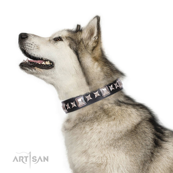 Malamute fine quality natural genuine leather dog collar with adornments