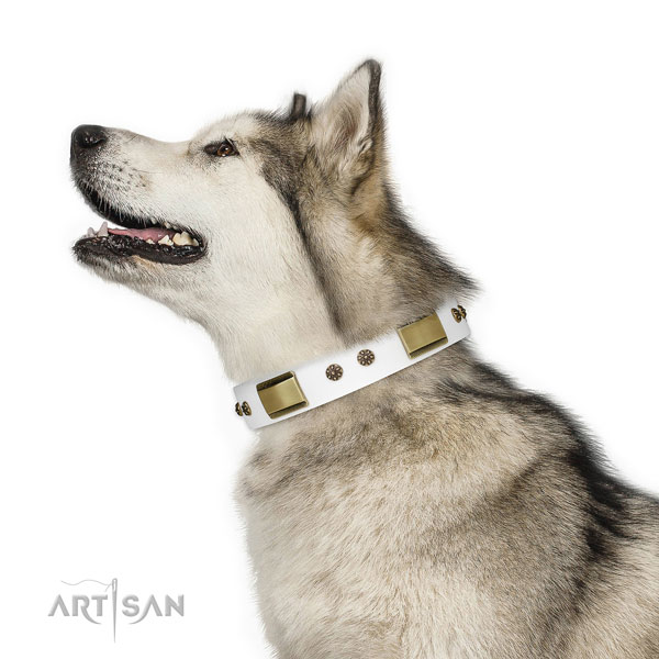 Malamute comfy wearing dog collar of fashionable natural leather