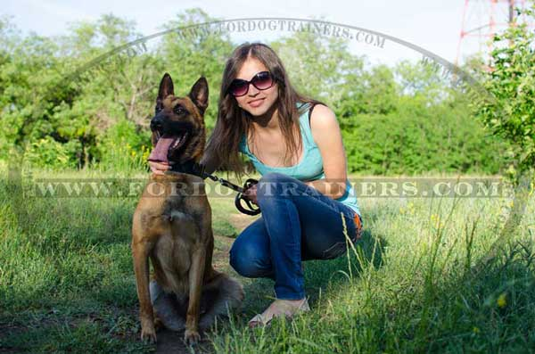 Walking Malinois leather collar with ID tag