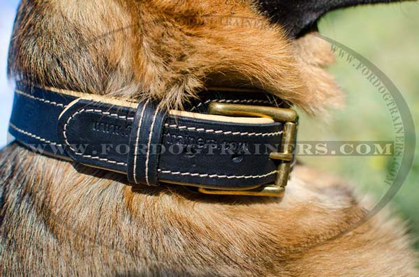 Massive Brass Buckle on Nappa Leather German Chepherd Collar Padded