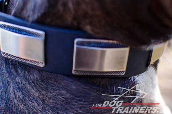 Nickel Plated Decorations on Leather Pitbull Collar