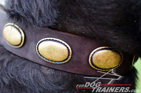 Decorative Brass Plates on Leather Dog Collar