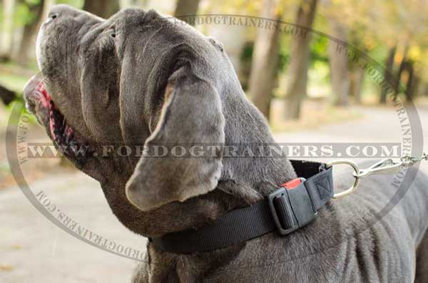 Mastino Napoletano Collar Nylon Classic All Weather Dog Supply