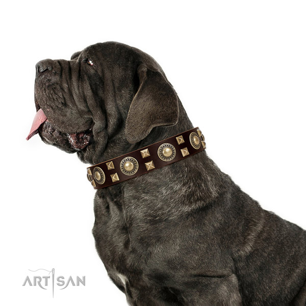 Extraordinary walking leather Mastino Neapoletano collar with chic decorations