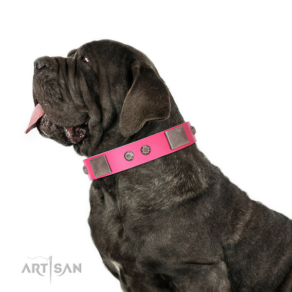 Extraordinary walking pink leather Mastino Neapoletano