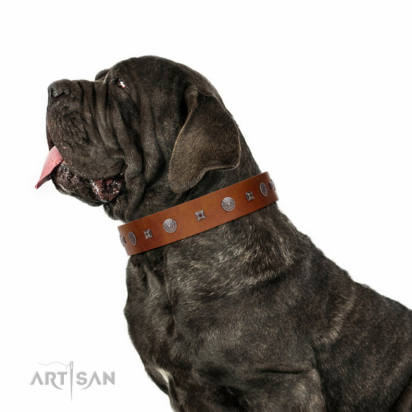 Extraordinary walking tan leather Mastino Neapoletano collar with chic decorations