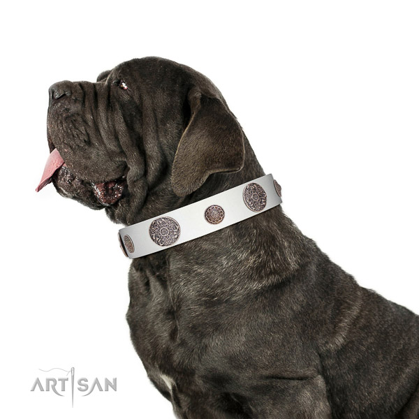 Extraordinary walking white leather Mastino Neapolitano
