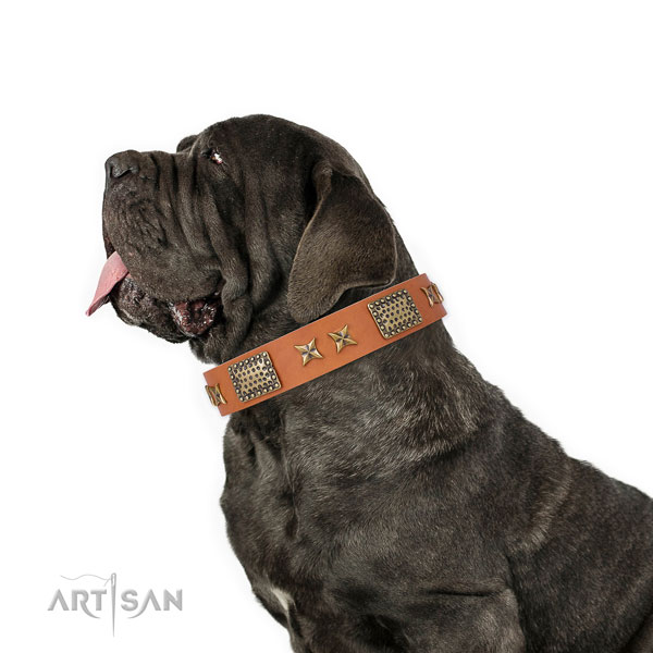 Mastino Neapoletano comfortable wearing dog collar of exceptional quality genuine leather