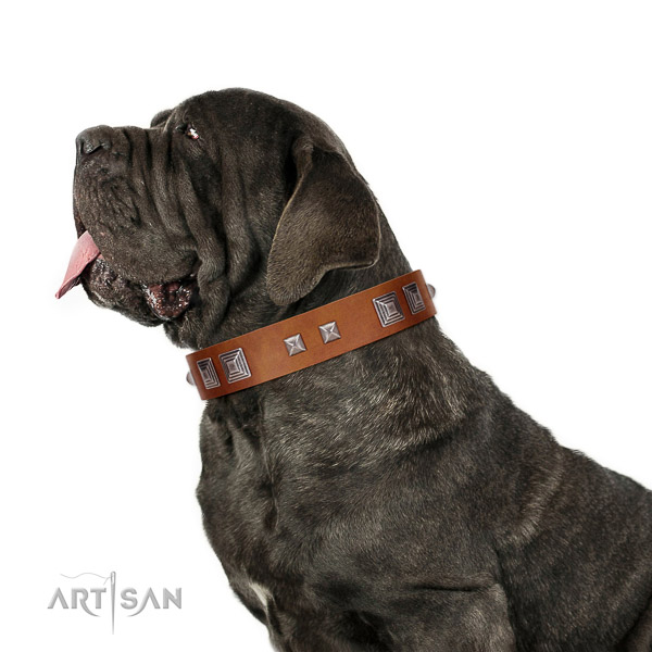 Top quality leather Mastino Neapolitano collar for any activity
