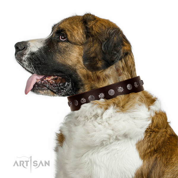 Walking top-notch quality walking leather Moscow Watchdog collar
