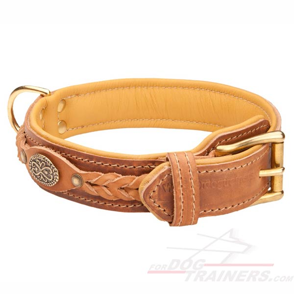 Padded Leather Cane Corso Collar with a Strong Buckle